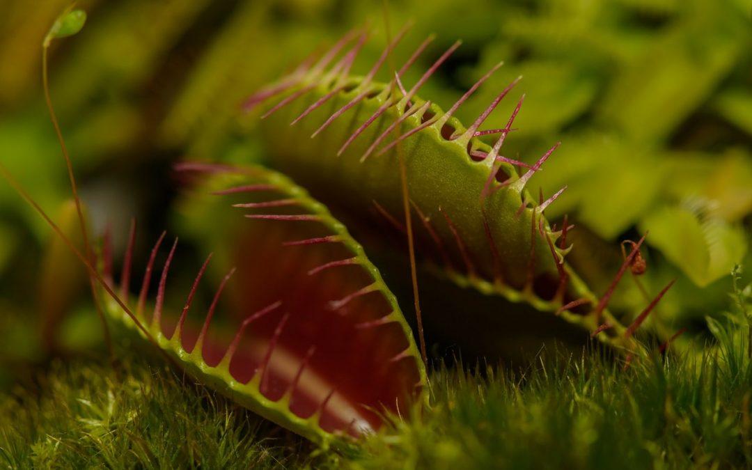 Protegido: CAE – Carnivorous plants